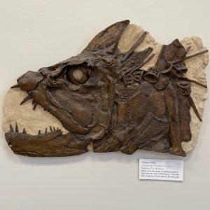 Xiphactinus audax skull
