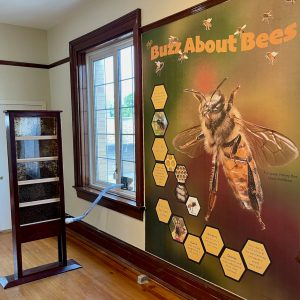 Buzz About Bees Exhibit